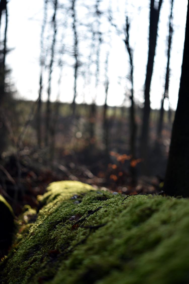 tell a story • mein Ruhepol • Waldstück in der Nähe