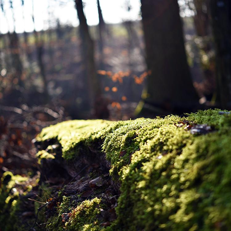 tell a story • Pflanzen • alter Baumstamm mit Moos bewachsen