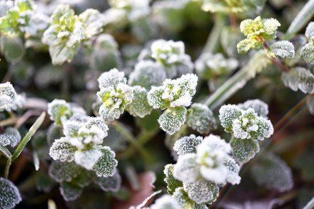 tell a story • Pflanzen • gefrorene Bodendecker