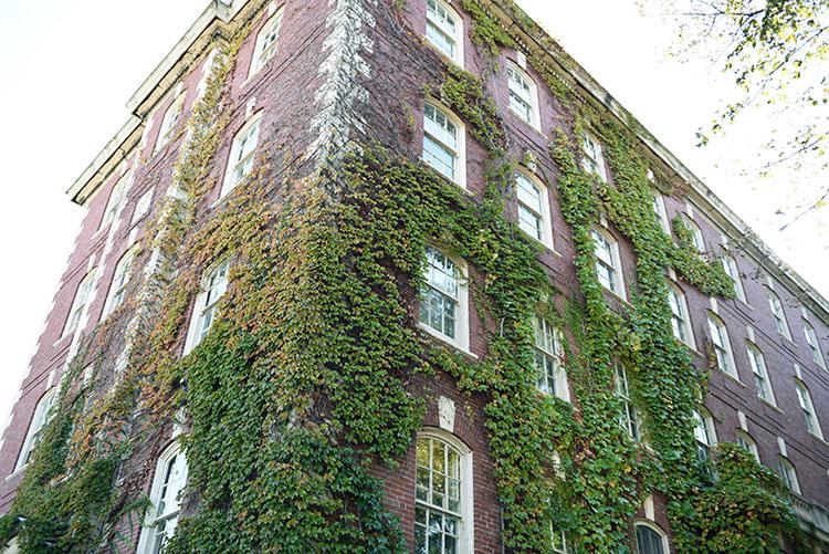 tell a story • Pflanzen • überwachsenes Gebäude in Boston