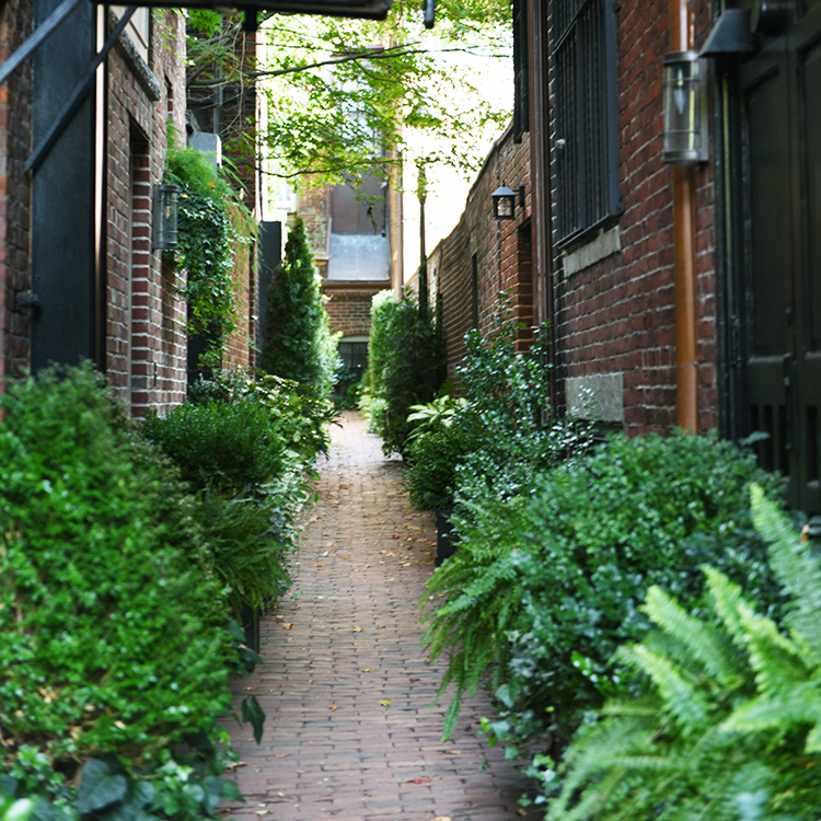 tell a story • Pflanzen • Seitengasse in Bosten