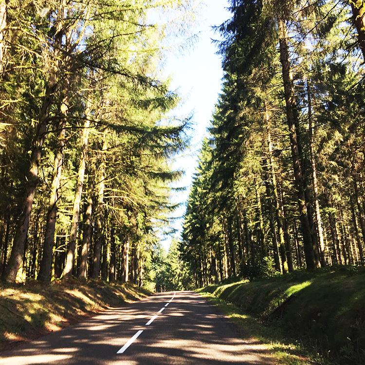 tell a story • Bäume • Elsass