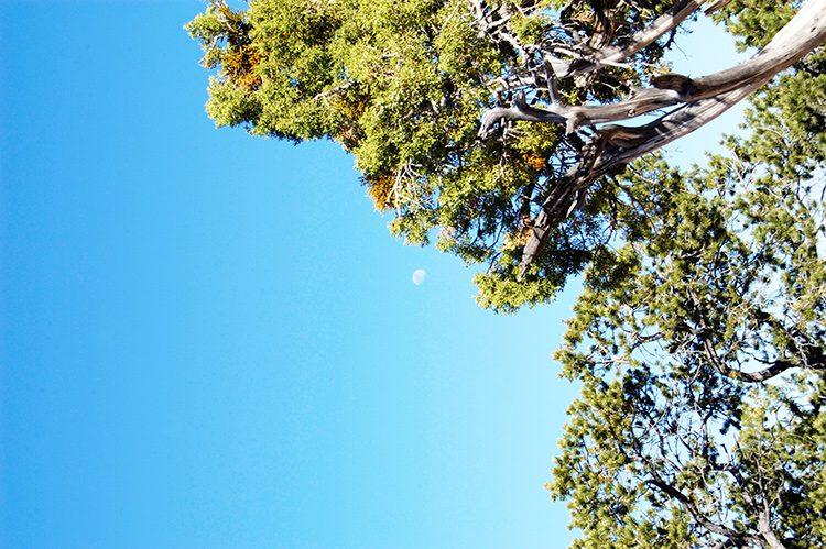 tell a story • Bäume • mit dem Mond