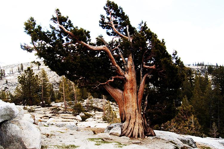 tell a story • Bäume • Unterwegs im Westen von Amerika