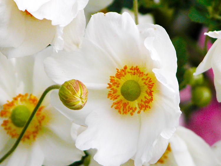 • tell a story • Blumen • weisse Blumen
